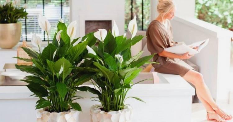 Ці 10 рослин принесуть щастя і гроші в ваш будинок. Золоті поради Олени Курилової.