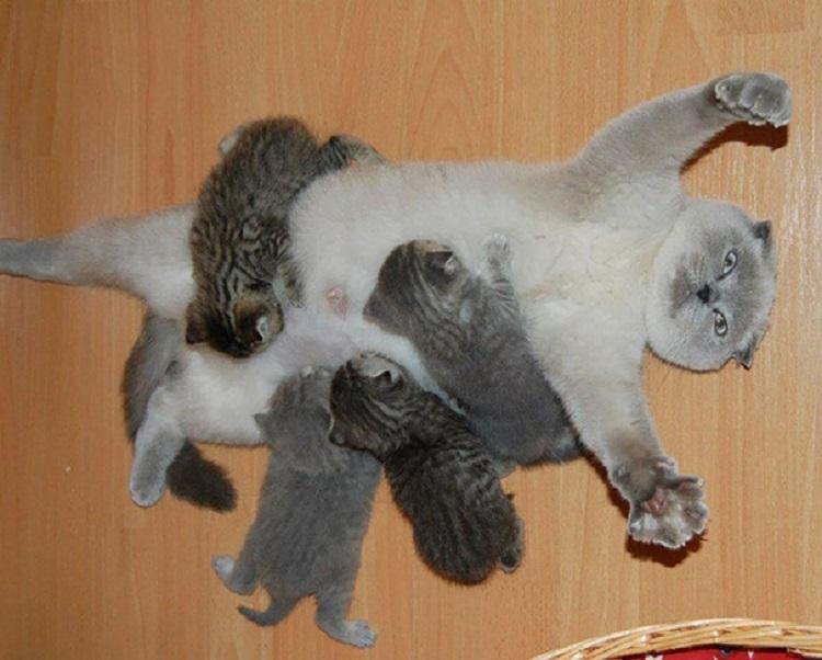 20 матусь-кішок, які явно пишаються своїми кошенятами