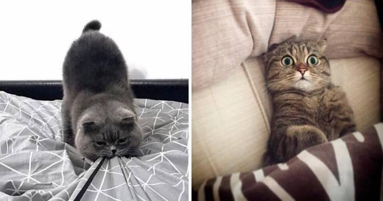 20 забавних фото, в яких вся суть котів. «Вусаті» приколи!