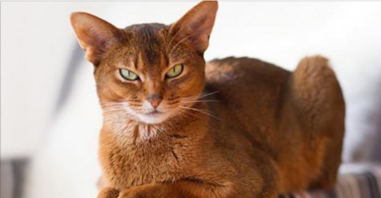 Як кішка вказує на присутність негативу в будинку