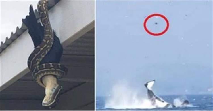 13 знімків знову доводять те, що природа — жахлива штука!