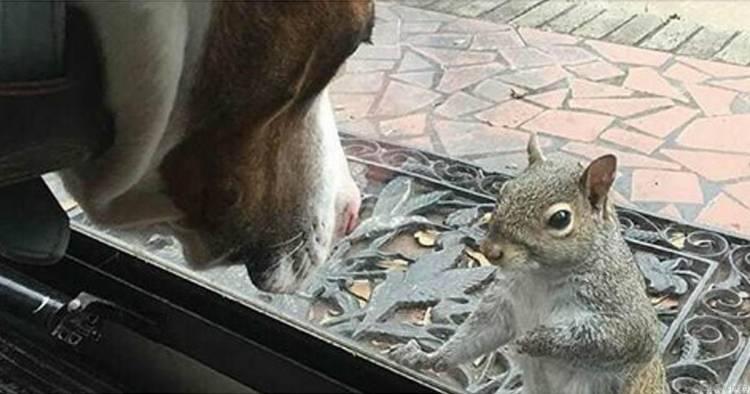 Білка стукає в двері кожен день — а через 8 років сім'я дізнається, що білка хоче їм щось показати
