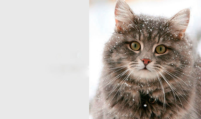 Кішка — показник вашого благополуччя!