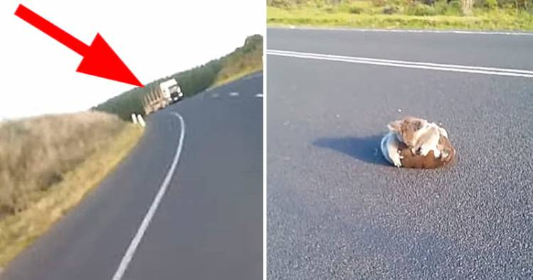 Волохатий клубок котився їй прямо під колеса! Жінка зупинила машину і побачила …