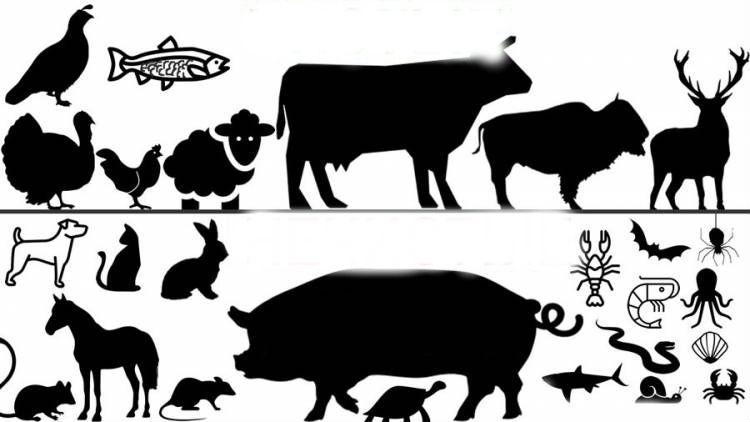 То яка різниця між чистими і нечистими тваринами?