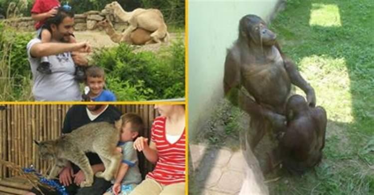 Коли похід в зоопарк видався не таким, як ти собі уявляв