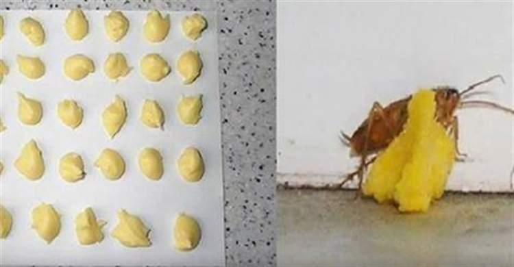 Всього 1 інгредієнт допоможе ефективно позбутися від тарганів, мурах і бліх!