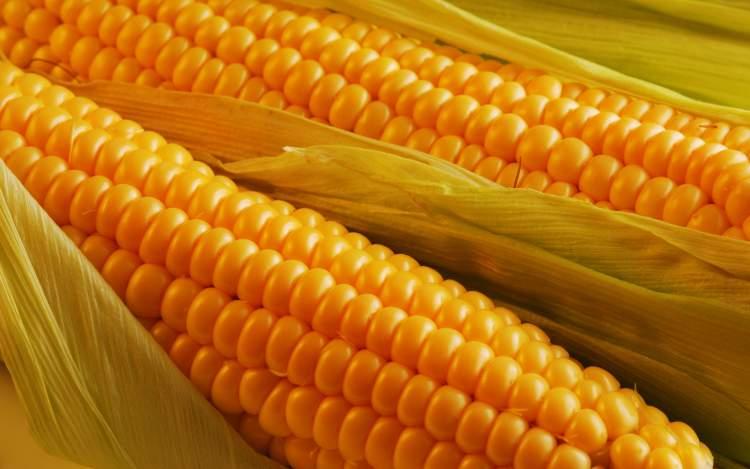 Єдиний правильний спосіб варити найсмачнішу кукурудзу