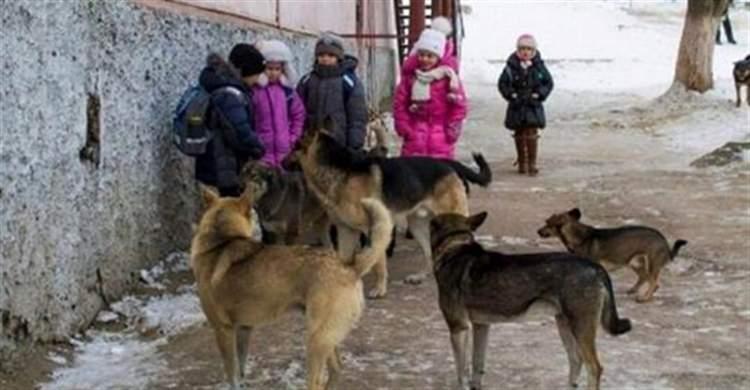 Ми кричали, але люди розбігалися, як таргани !!! На допомогу дітям прийшли бродячі собаки