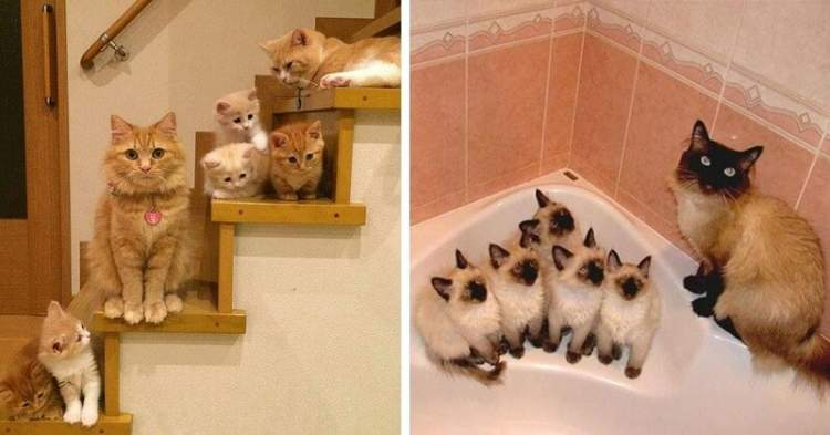 20 матусь-кішок, які пишаються своїми кошенятами