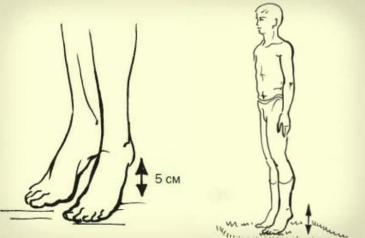Гімнастика, яка здатна покращувати венозний кровообіг: навіщо потрібно стукати п'ятами по підлозі