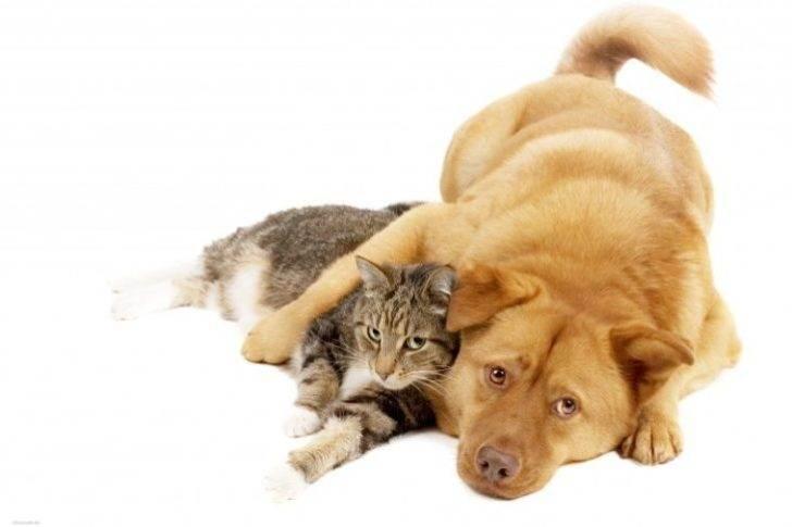 Історія про те, як мій кіт вирішив прогодувати всю нашу родину: мене, себе і пса Бакса