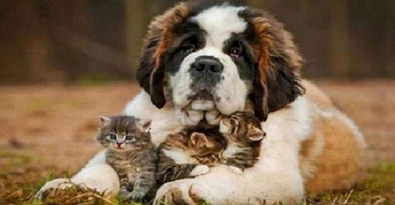 Наймилішs створіння: 10 найдобріших порід собак на світі