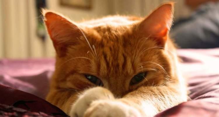 Мій рудий бешкетник-кіт виявився вірним і надійним другом