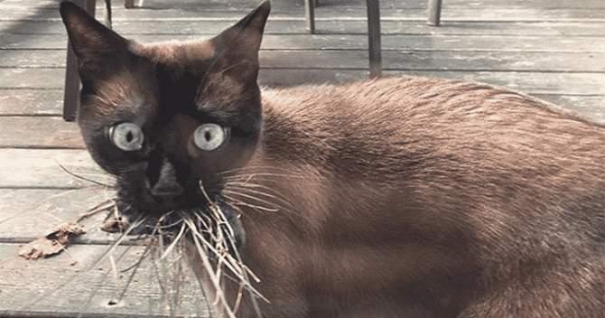 Кішки, які приносять несподівані подарунки своїм господарям