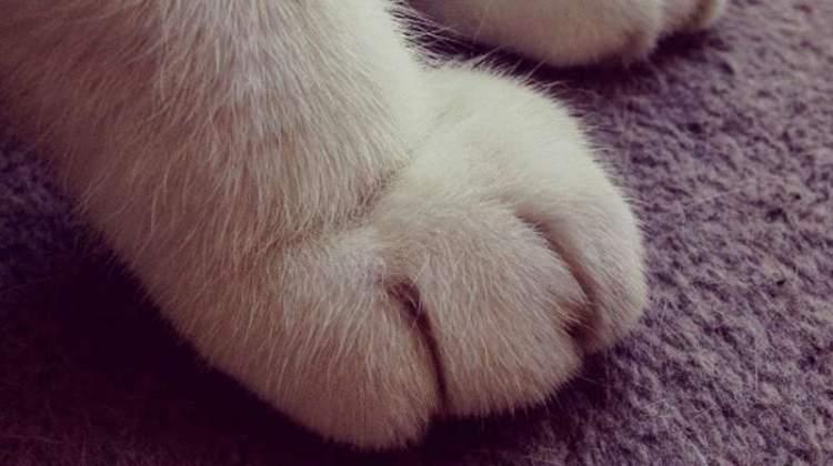 Подивіться на ці фотографії, і ви вже ніколи не захочете мати вдома кота