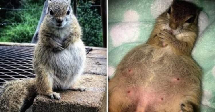 Дика білка народжувала в будинку тієї сім'ї, яка її виростила
