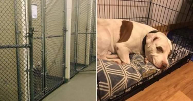 Здогадавшись, що його нарешті забирають, останній пес в притулку не зміг стримати емоцій
