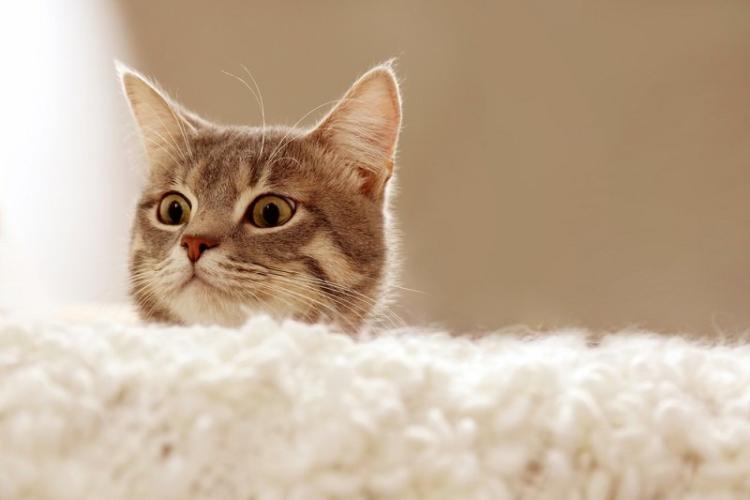 Якщо кішка любить спати в ліжку господаря, що це означає?